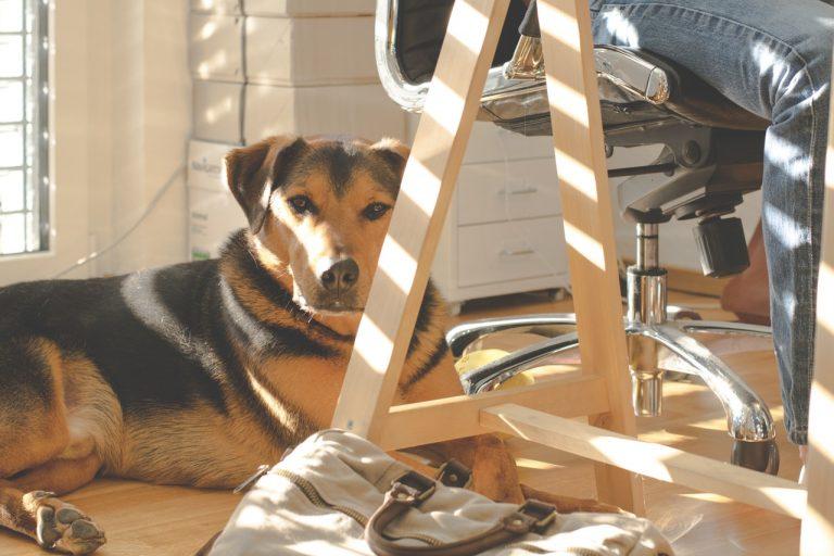В българска фирма ходят с кучета в офиса