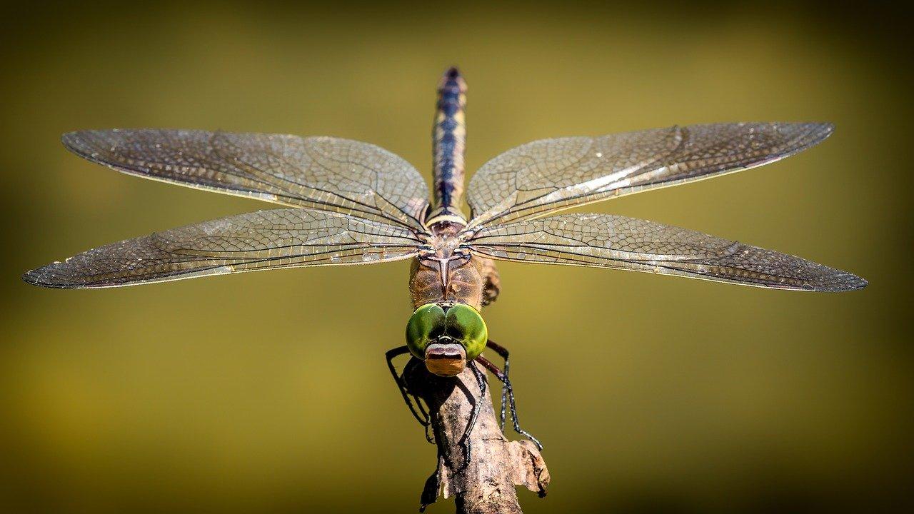 Колко ефективни са ултразвуковите устройства против насекоми и вредители